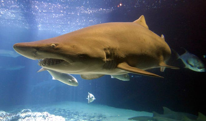 """Aaron Rodgers faces his fear of sharks during Discovery's Shark Week. """"Monster Tag"""" airs at 7 p.m. Monday."""