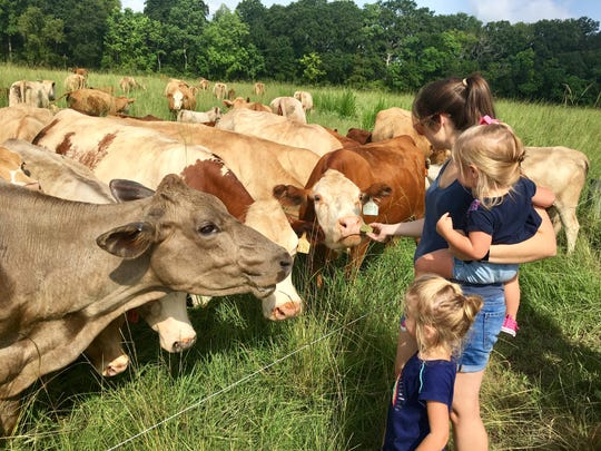 Travel and tourism reporter Leigh Guidry and daughters feed grass to cows at Brookshire Farm in Abbeville July 20, 2018.