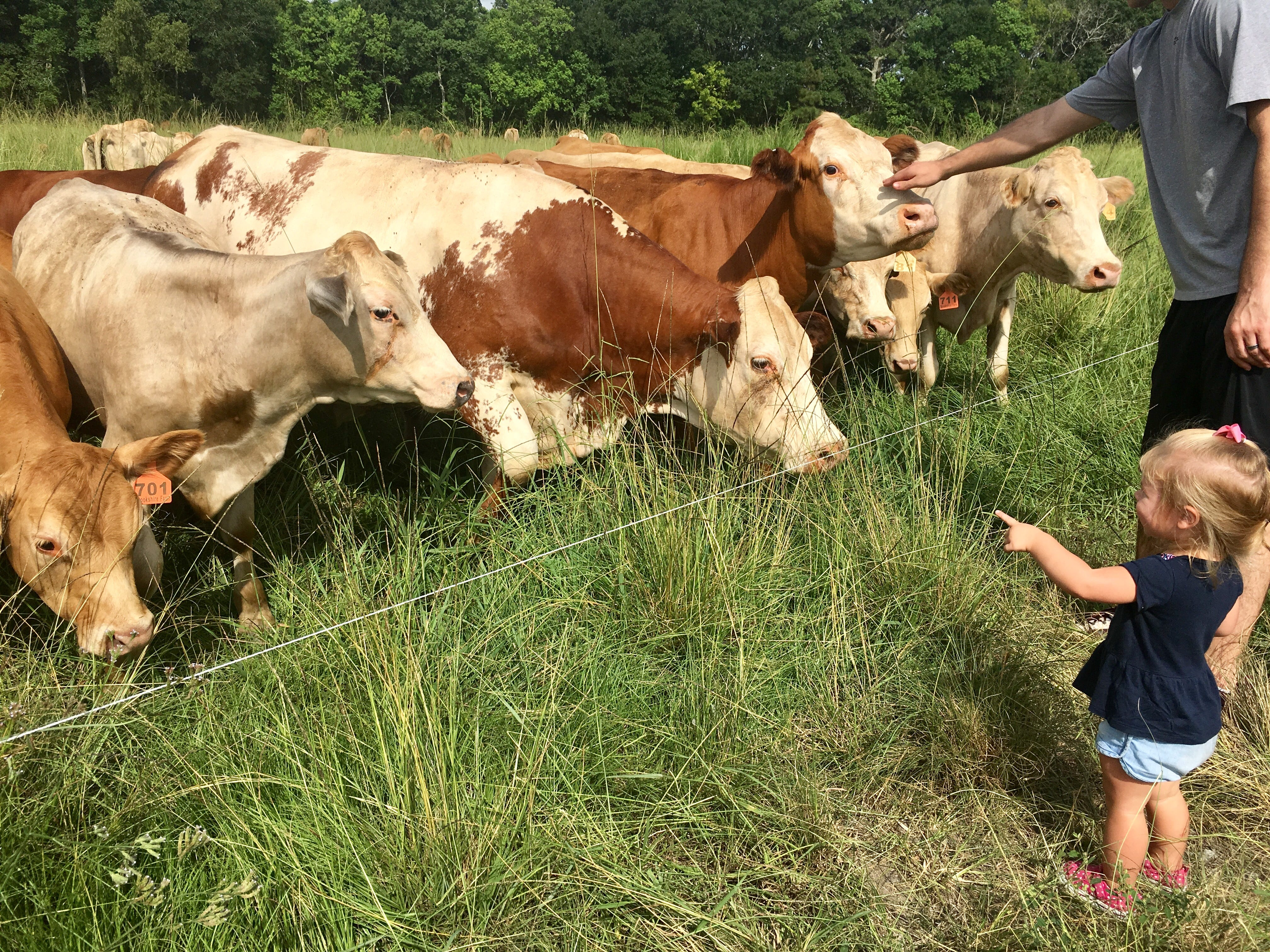 "Marie Guidry, 1, says ""cow!"" during a tour of Brookshire Farm in Abbeville July 20, 2018."