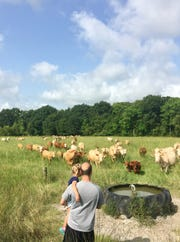 Eric Guidry carries daughter Avery, 4, across a pasture to feed cows during a family trip to Brookshire Farm in Abbeville July 20, 2018.