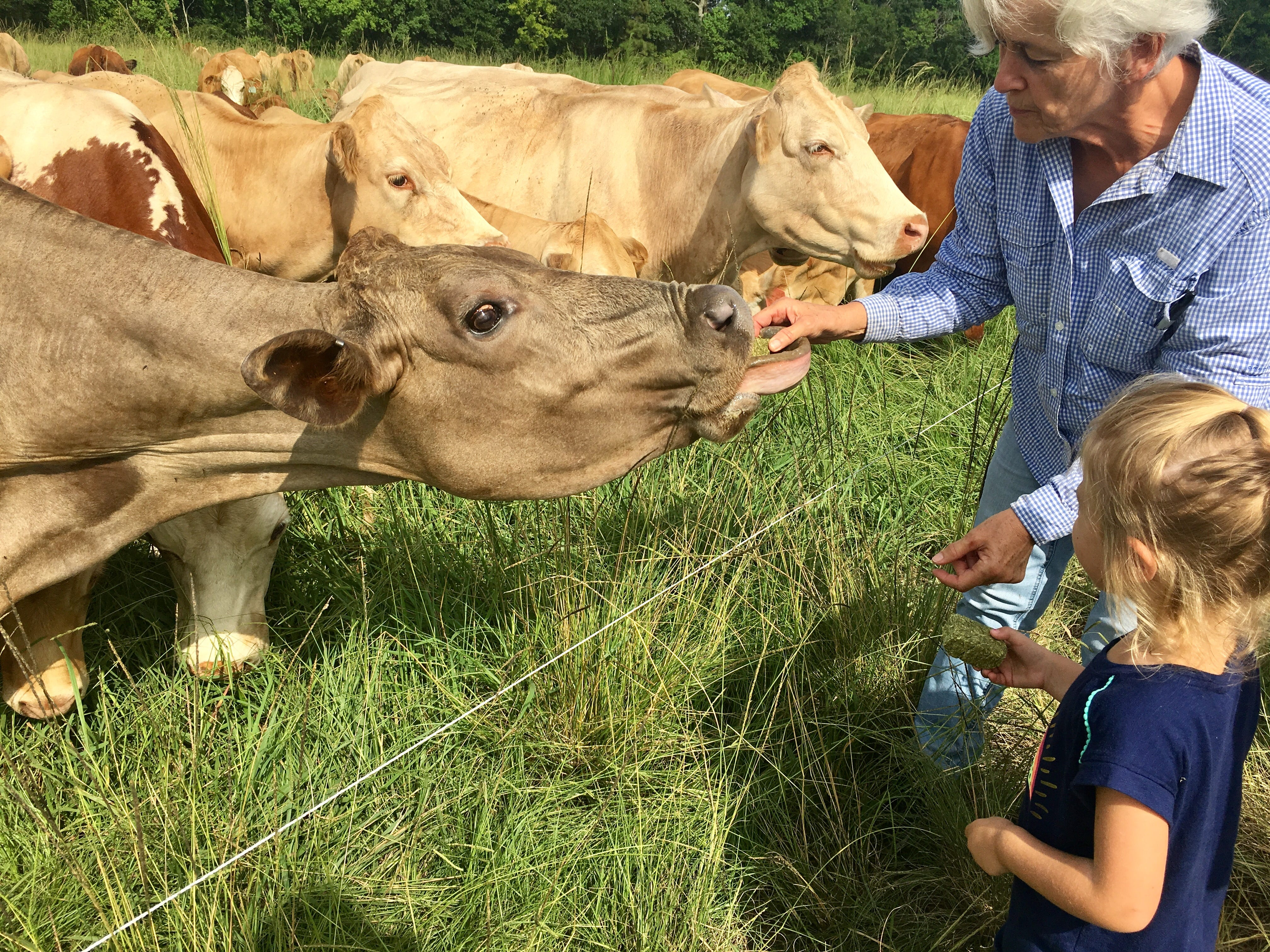 Anne Blanchet helps Avery Guidry, 4, feed grass to Chocolate the cow during a family trip to Brookshire Farm in Abbeville July 20, 2018.