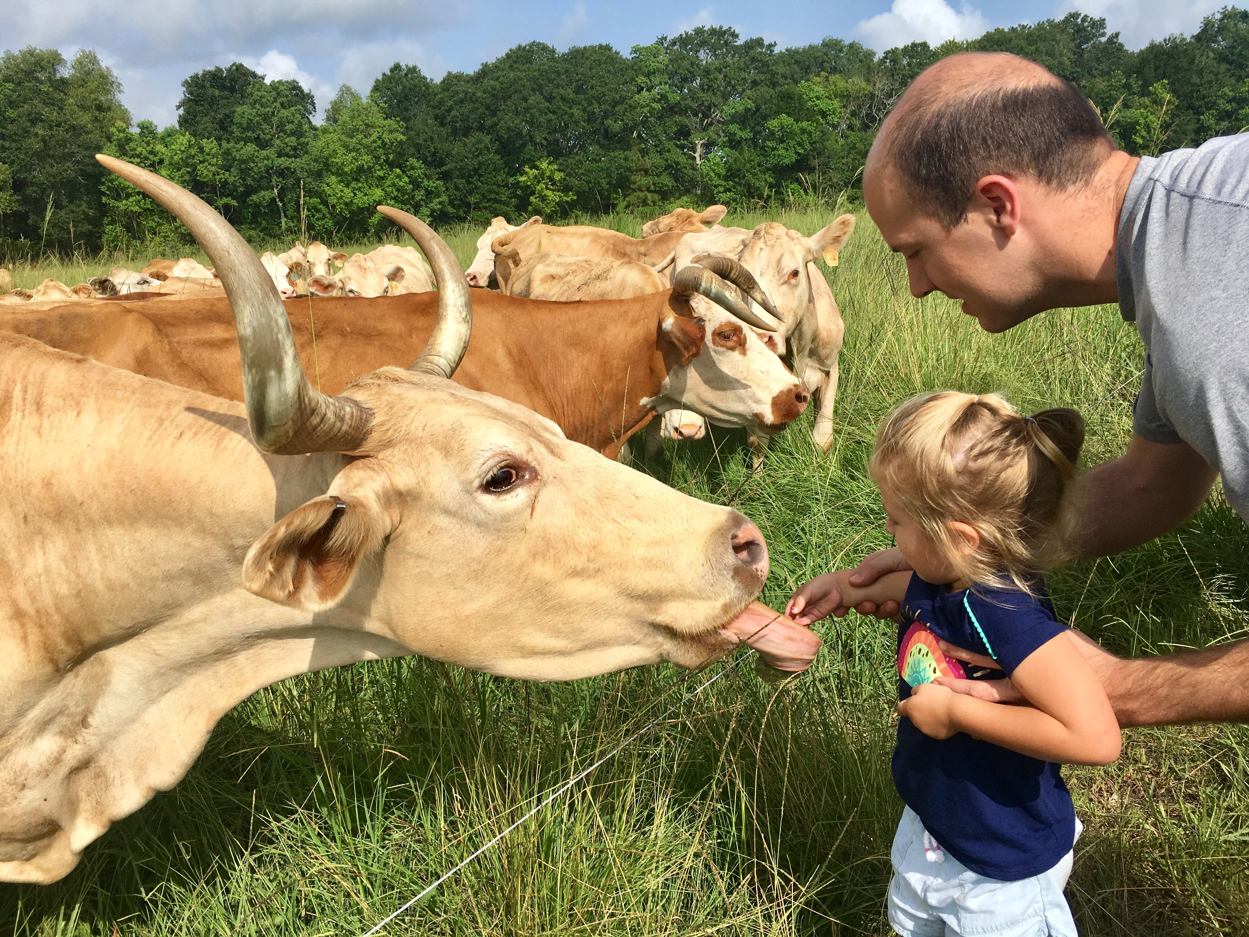 Eric Guidry helps daughter Avery, 4, feed grass to Beva the cow during a family trip to Brookshire Farm in Abbeville July 20, 2018.