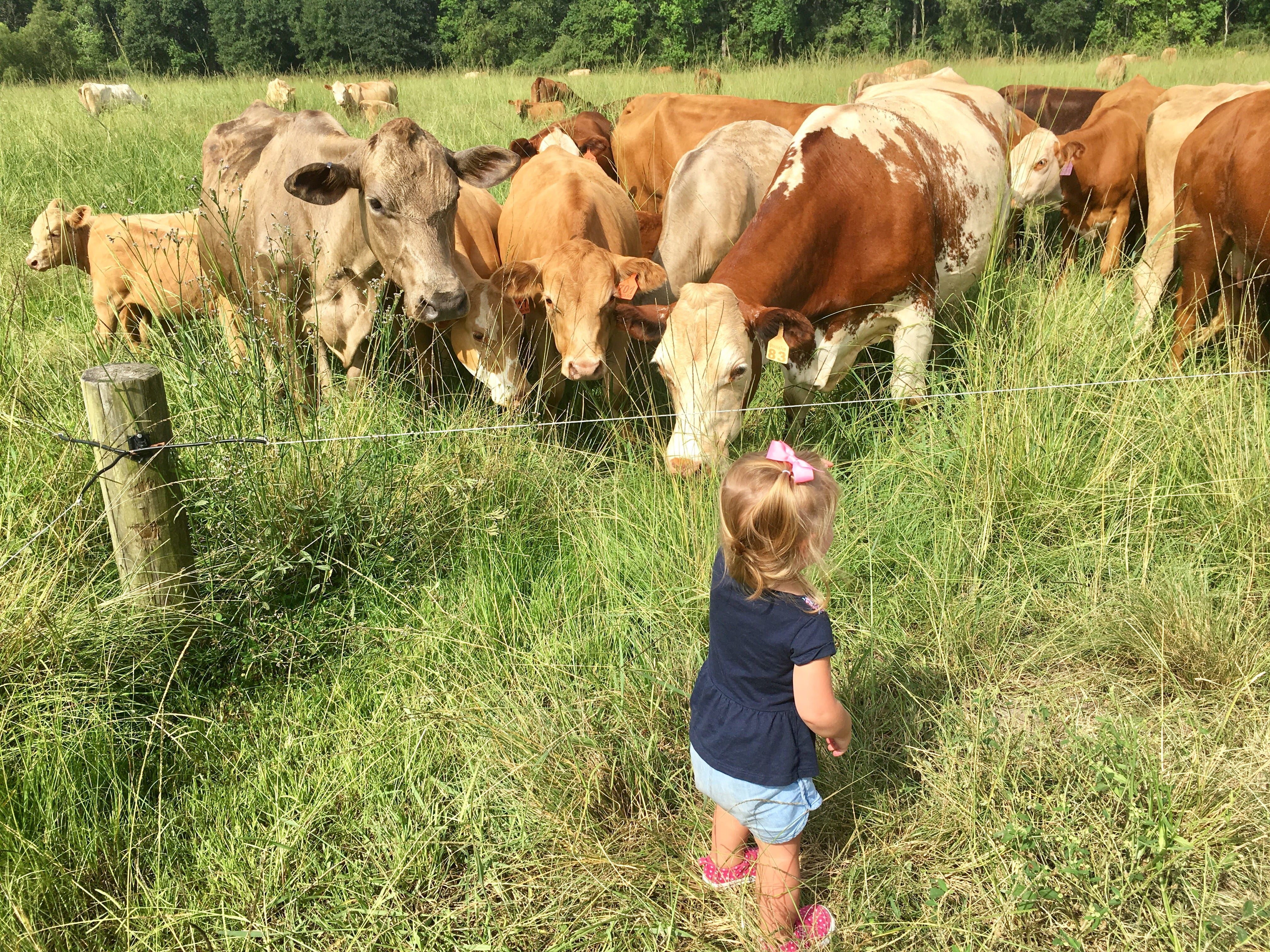 Marie Guidry, 1, meets cows at Brookshire Farm in Abbeville July 20, 2018.