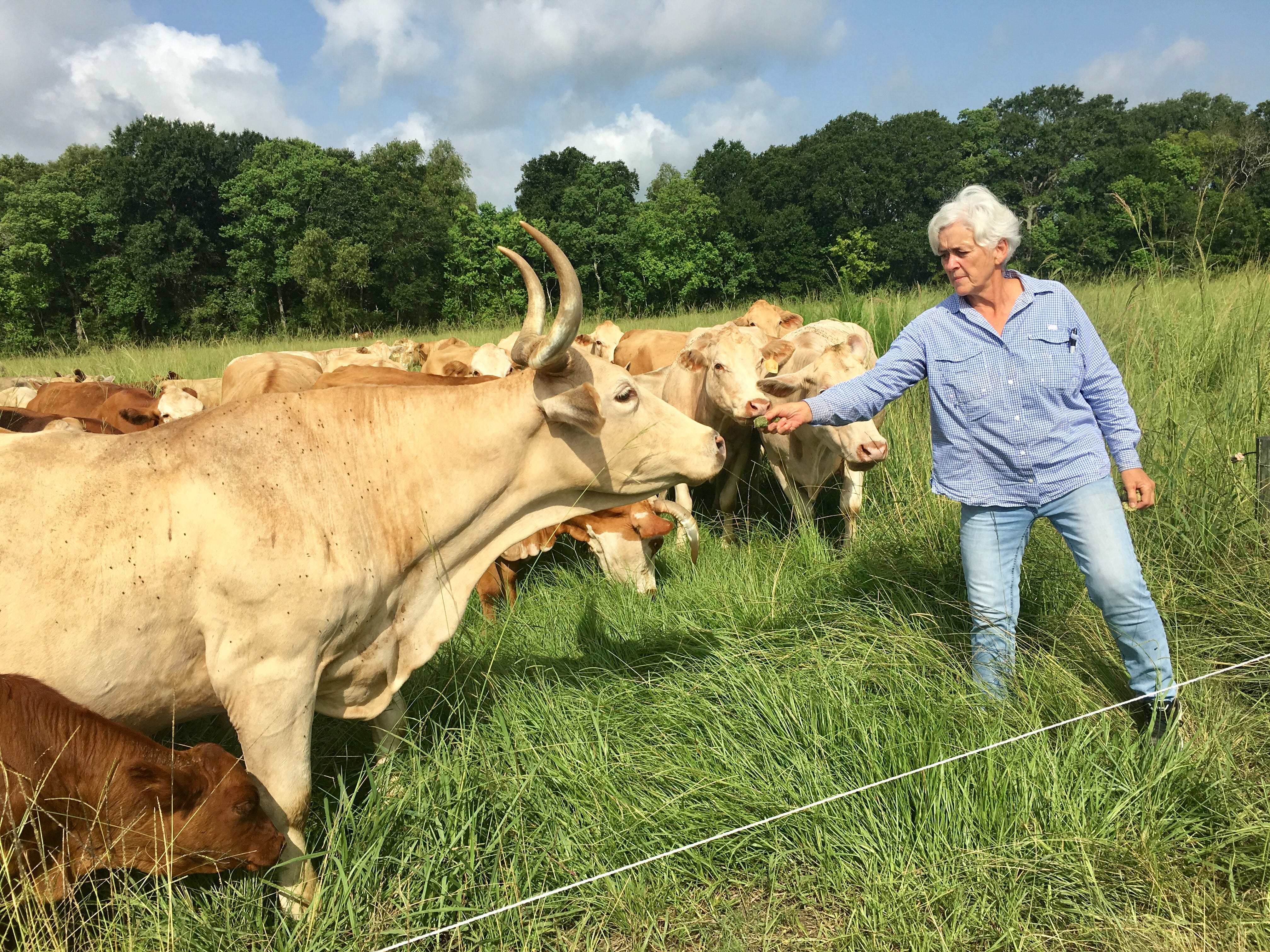 Brookshire Farm owner Anne Blanchet feeds her cows while giving a tour July 20, 2018.
