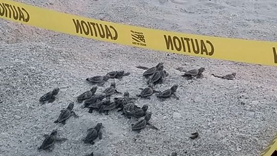 Hundreds of turtles, Southwest Airlines and a secret video: Trafficking ringleader arrested