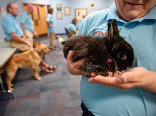 Members of the Central Minnesota Therapy Animal Association have dogs, rabbits and miniature horses that are certified therapy pets. They are shown Tuesday, July 17, at St. John's Episcopal Church