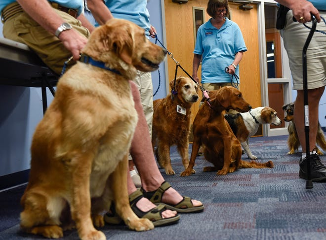 Certified therapy pets sit quietly as members of the Central Minnesota Therapy Animal Association hold their monthly meeting Tuesday, July 17, at St.  John's Episcopal Church