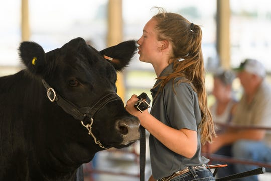 Blake Ellen Eblen whispers to her cow as they wait for Judge Jesse Kostbade to deliberate in the Cattle Show's Beginner Showmanship class at the Henderson County Fairgrounds, Friday evening, July 20, 2018.