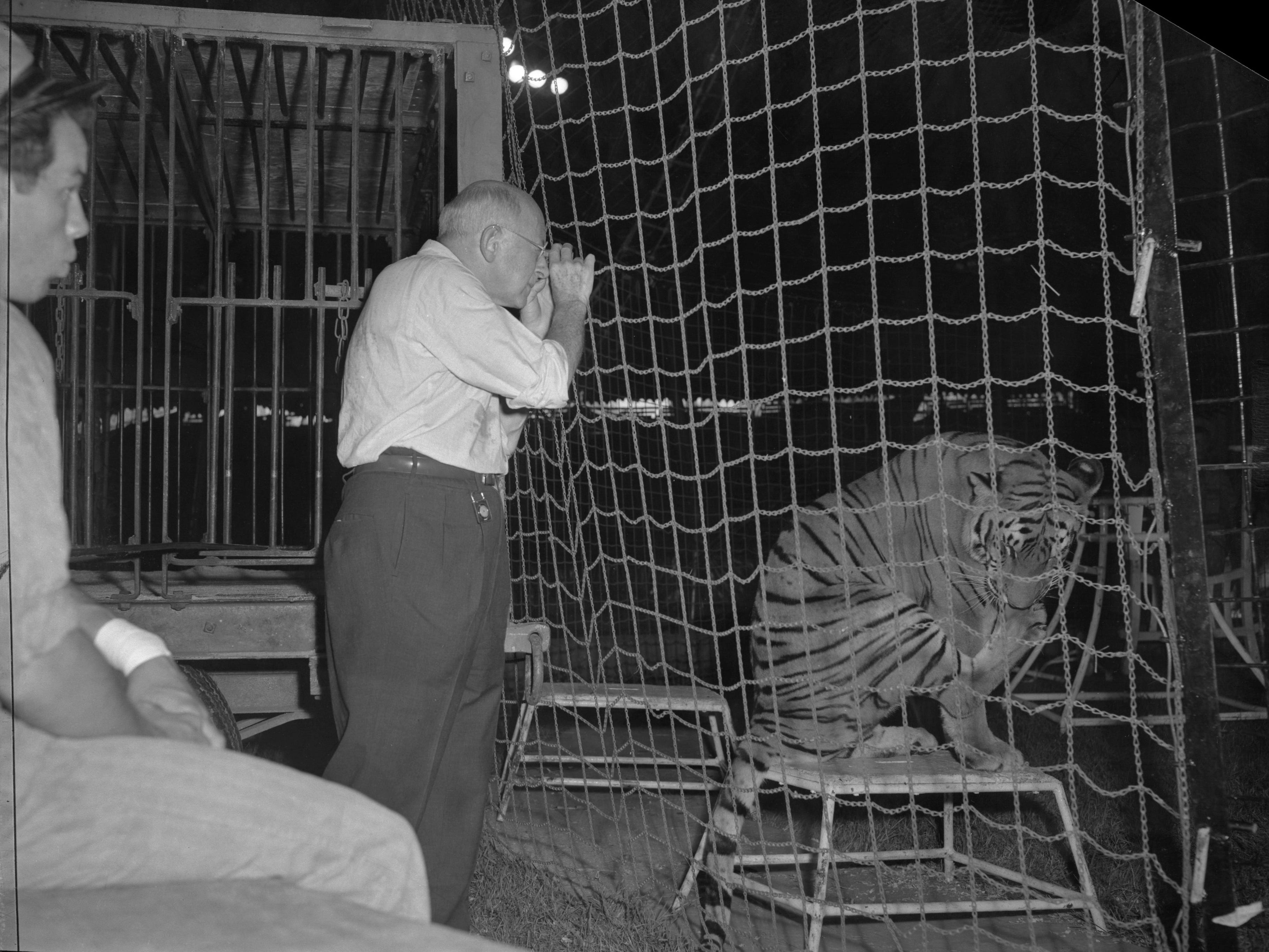 "Director Cecil B. De Mille gets up close and comfortable with a tiger while researching circus life for an upcoming movie during the summer of 1949. De Mille joined the Ringling Bros. and Barnum & Bailey Circus on the road in Chicago, and continued with the circus at the Wisconsin State Fair in West Allis. The research he did that summer formed the basis of his Oscar-winning 1952 epic, ""The Greatest Show on Earth."" This photo was published in the Sept. 4, 1949, Milwaukee Journal."
