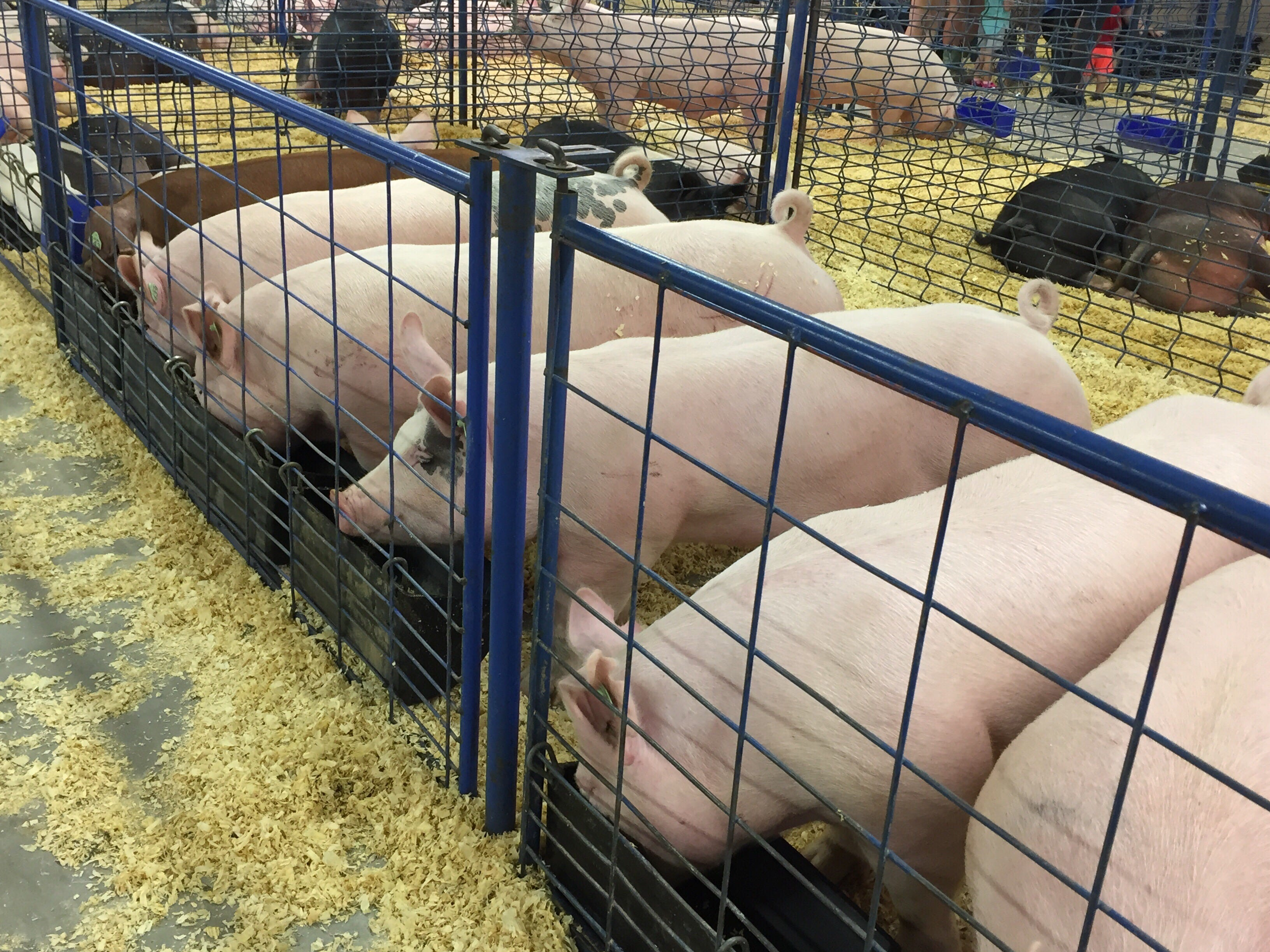 There was plenty to do on opening day of the Lebanon Area Fair despite pouring rain.