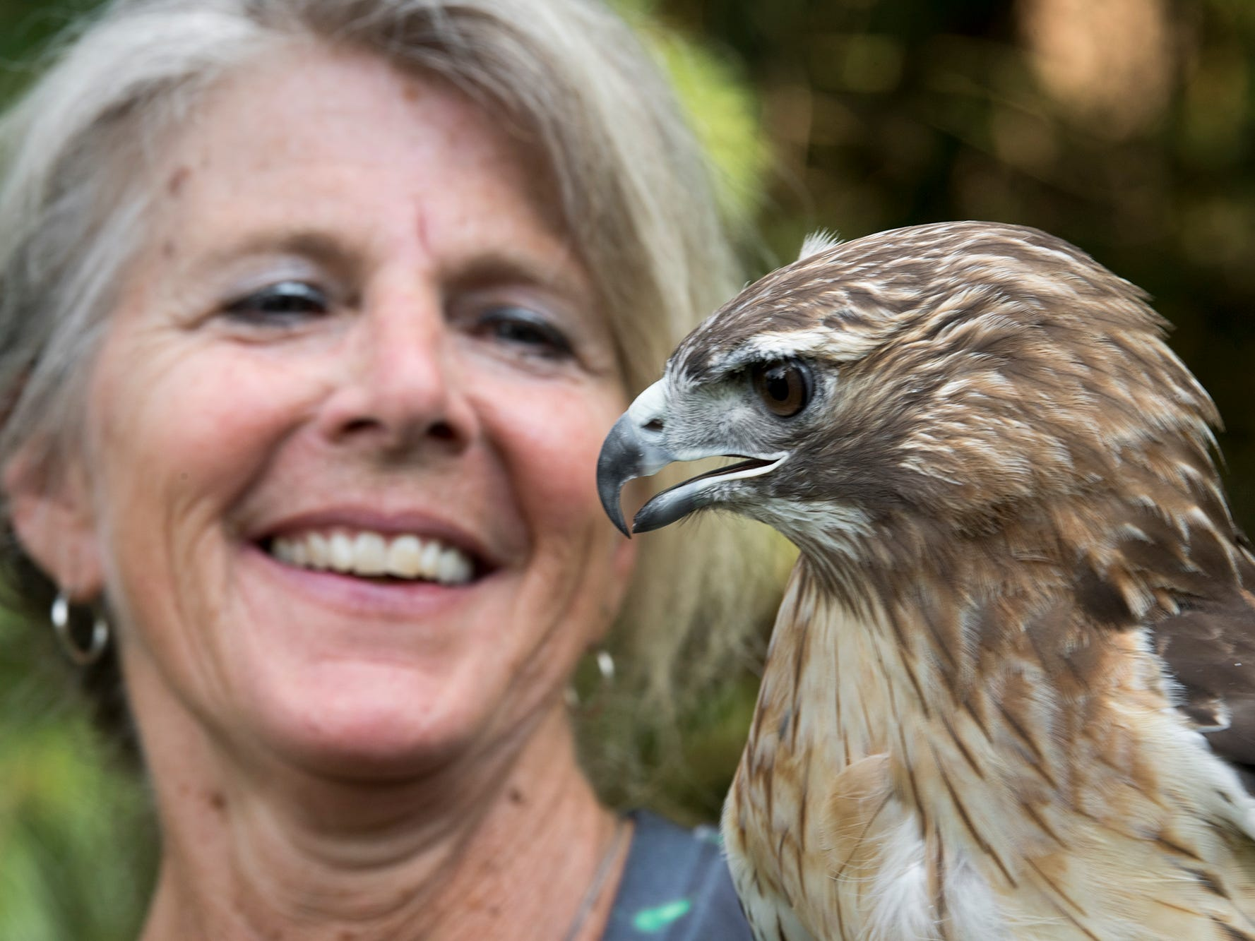 Mitzi Eaton with a Red-tailed Hawk, an educational bird because it would not survive if was released into the wild on July 18, 2018. For 30 years, Eaton, has been York County's lifeline for injured and ill birds of prey at her home in Lower Windsor Township.