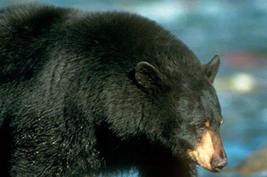 Blackbear 376