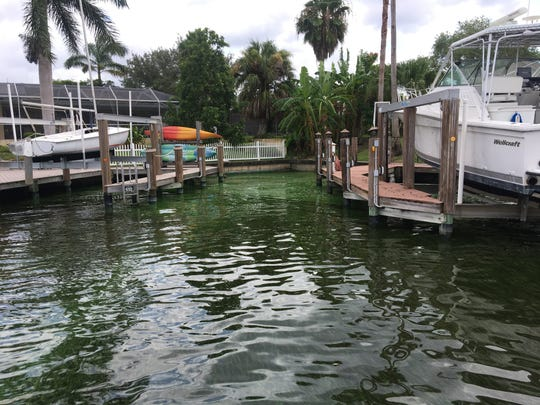 A green, spray-painted look appears on the water of the Bronte Canal in Cape Coral.