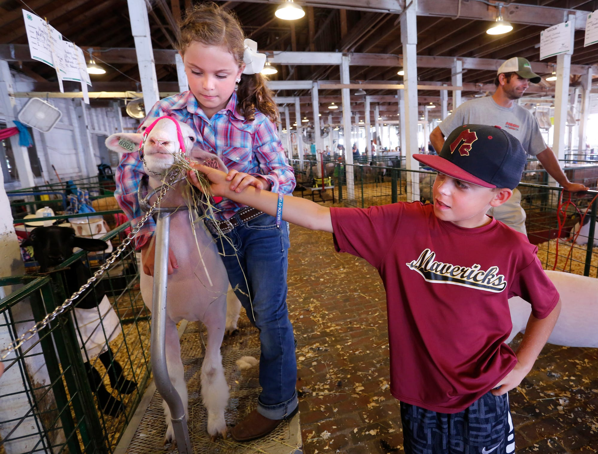 Cason Trader, 9, offers some hay for Rose, a sheep belonging to Haylee Greener, 9, at the Tippecanoe County 4-H Fair Monday, July 23, 2018, in Lafayette. Greener was preparing to show Rose in beginner showmanship. Greener and Trade will both be fourth grade students at Mintonye Elementary School in the fall.