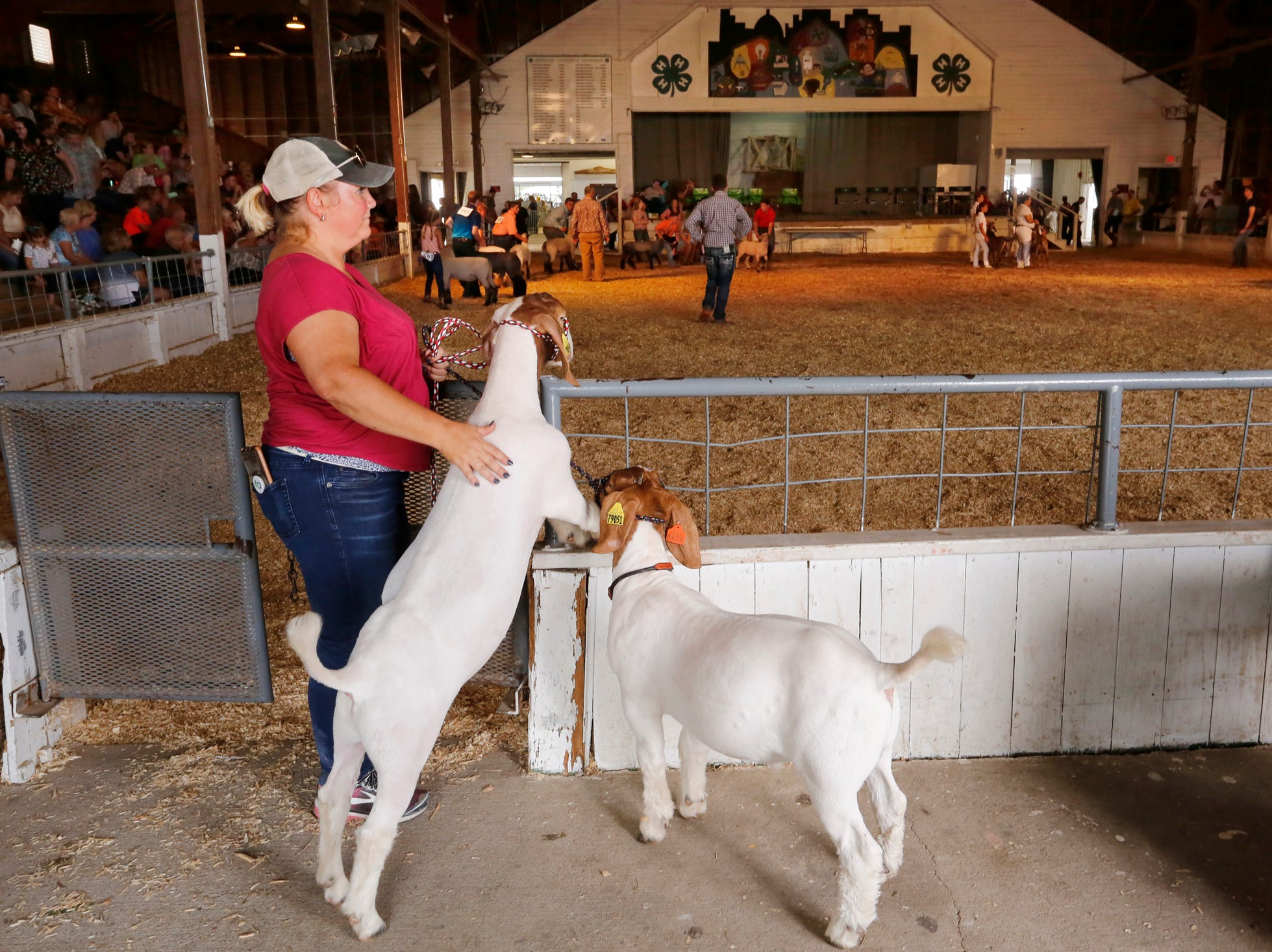 Jenny Brown keeps tabs on Boer goats that belong to her son, Dylan, 11, while he is busy showing other goats at the Tippecanoe County 4-H Fair Monday, July 23, 2018, in Lafayette.