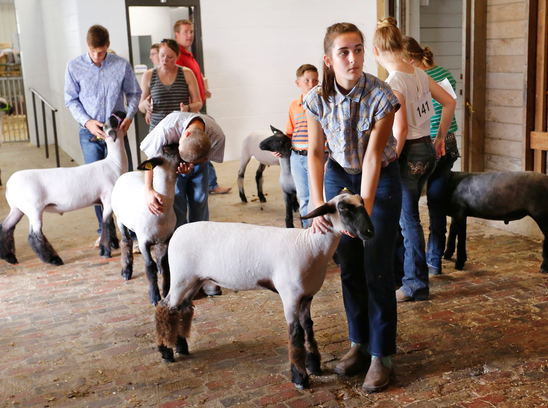 Contestants wait to show their sheep at the Tippecanoe County 4-H Fair Monday, July 23, 2018, in Lafayette.