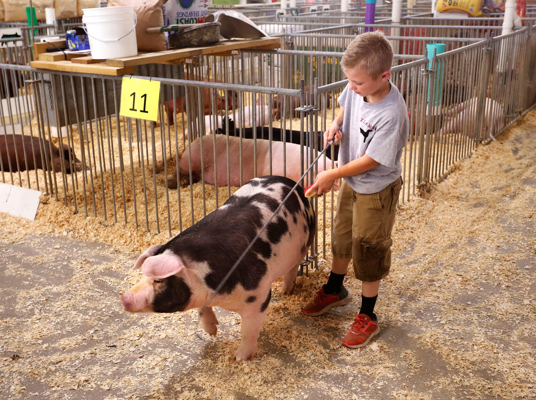 Eli Moseley, 10, directs his spot variety pig through the swine barn at the Tippecanoe County 4-H Fair Monday, July 23, 2018, in Lafayette. Moseley will be a fifth grade student at Sugar Creek Elementary in Montgomery County in the fall.