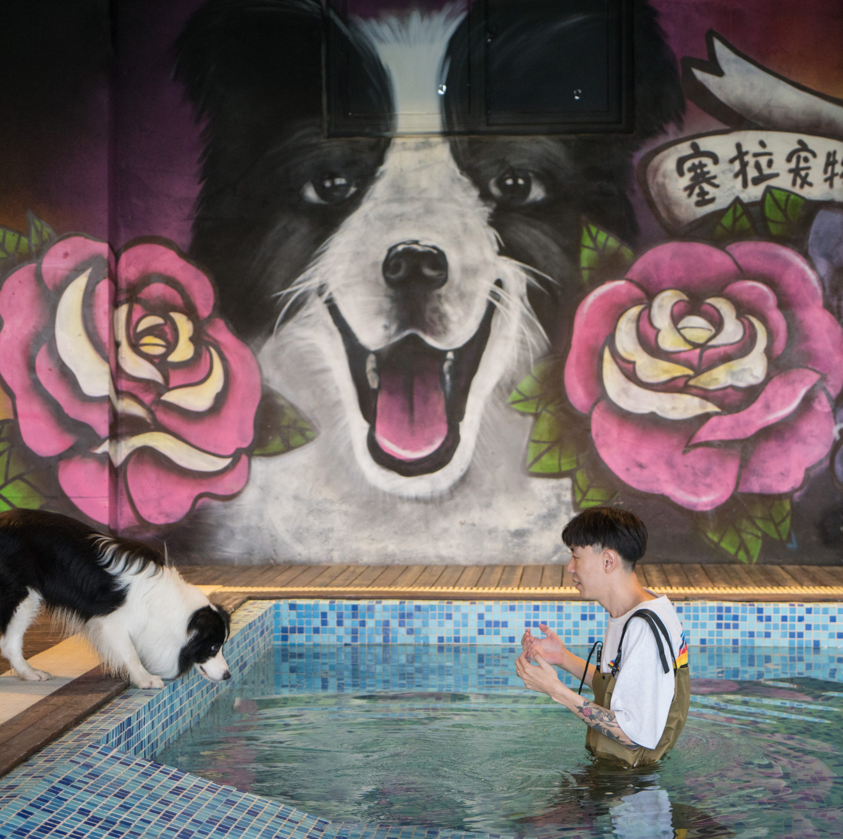 After making his owner rich, this border collie gets to live in a $500,000 pet mansion in Beijing