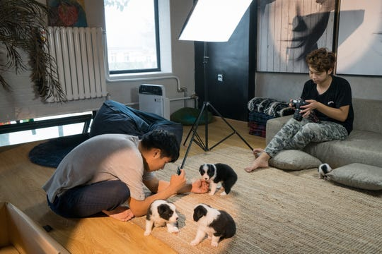 Staff members take photos of newborn puppies in a small studio at the doghouse in Beijing's suburbs. Sylar's populatirty led his owner, Zhou Tianxiao, to open an online dog food and toy store.