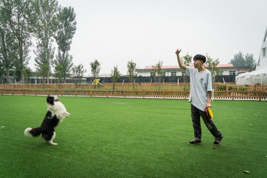 Zhou Tianxiao trains Sylar to stand up.