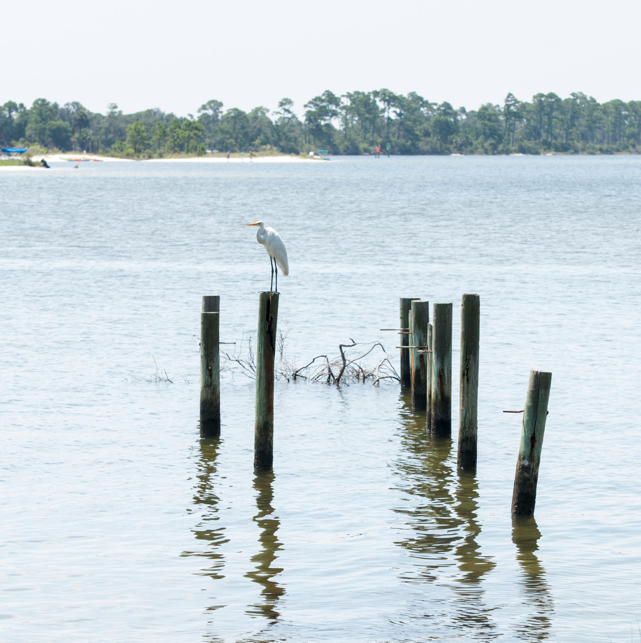 Major living shoreline project planned around Pensacola Naval Air Station