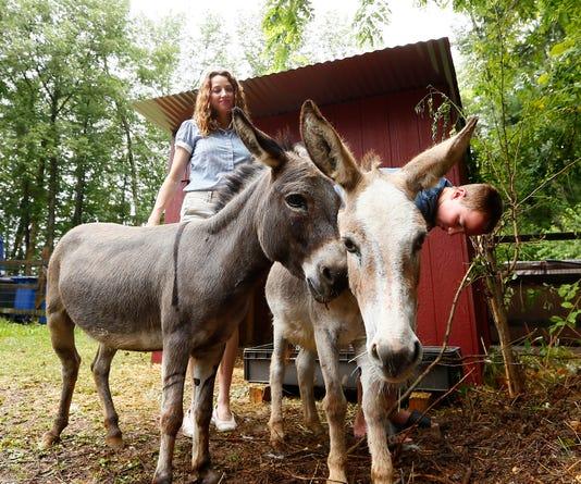 Runaway Donkeys
