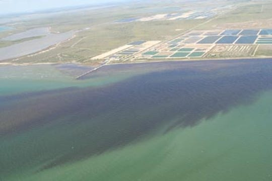 Red tide blooms can be small and isolated or large and sprawling.