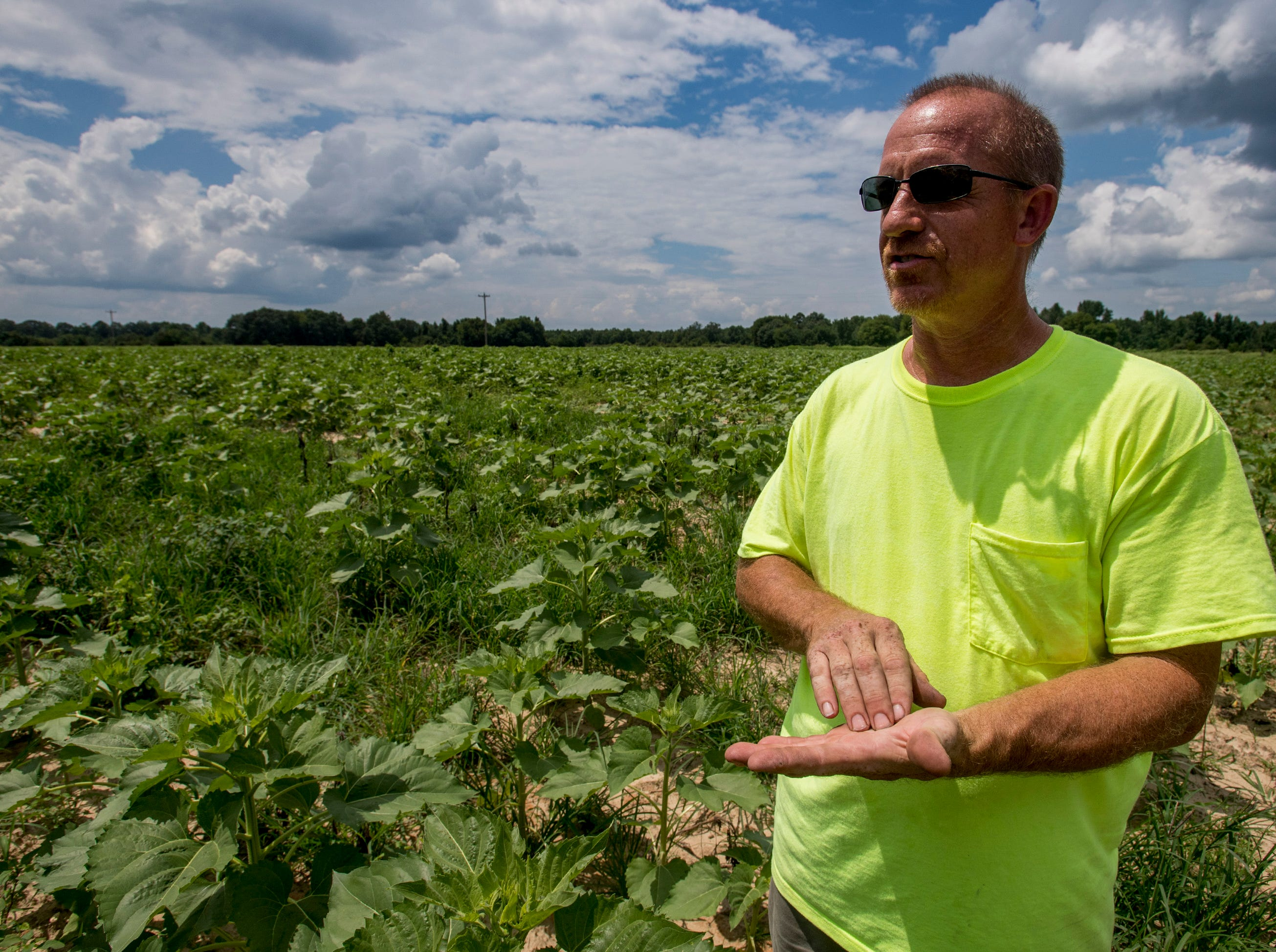 Todd Sheridan stands in his sunflower field near Autaugaville, Ala., on Tuesday, July 24, 2018. Sheridan had to replant the popular field, so it is not expected to bloom until August.