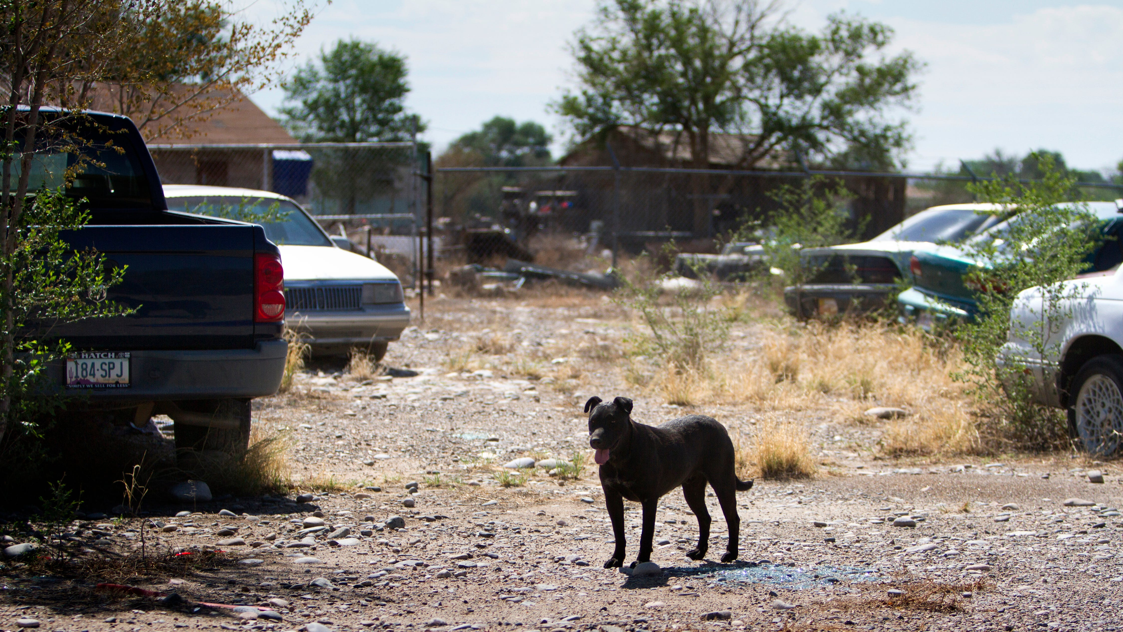 A dog hangs out, July 24, 2018 at the former location of Darrell's Automotive Garage in Shiprock.