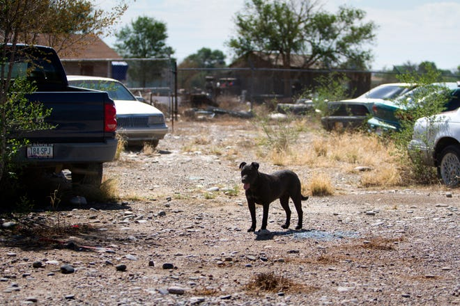 A dog strolls among the dozens of abandoned vehicles Tuesday at the former location of Darrell's Automotive in Shiprock.