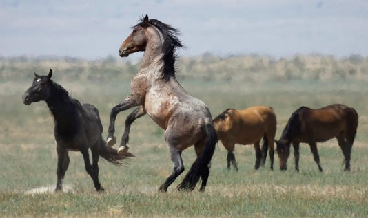Fmn Wild Horses 1 0725