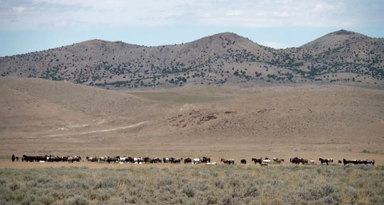 Wild horses graze outside of Salt Lake City on June 29.