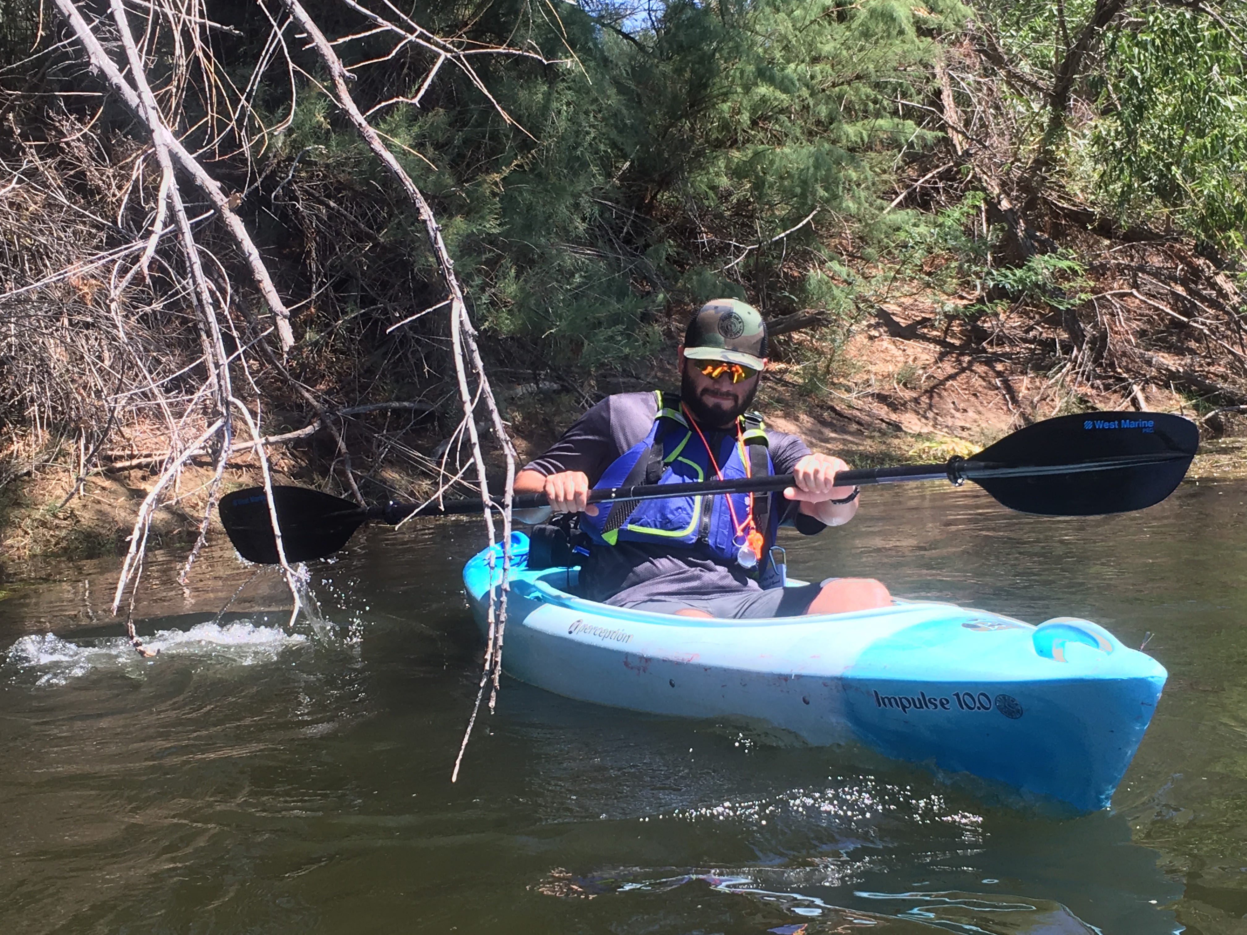 Israel Garcia, a biologist at the Arizona Game and Fish Department, dodges a tree limb on the Salt River while hunting down invasive apple snails and their eggs on July 20, 2018.