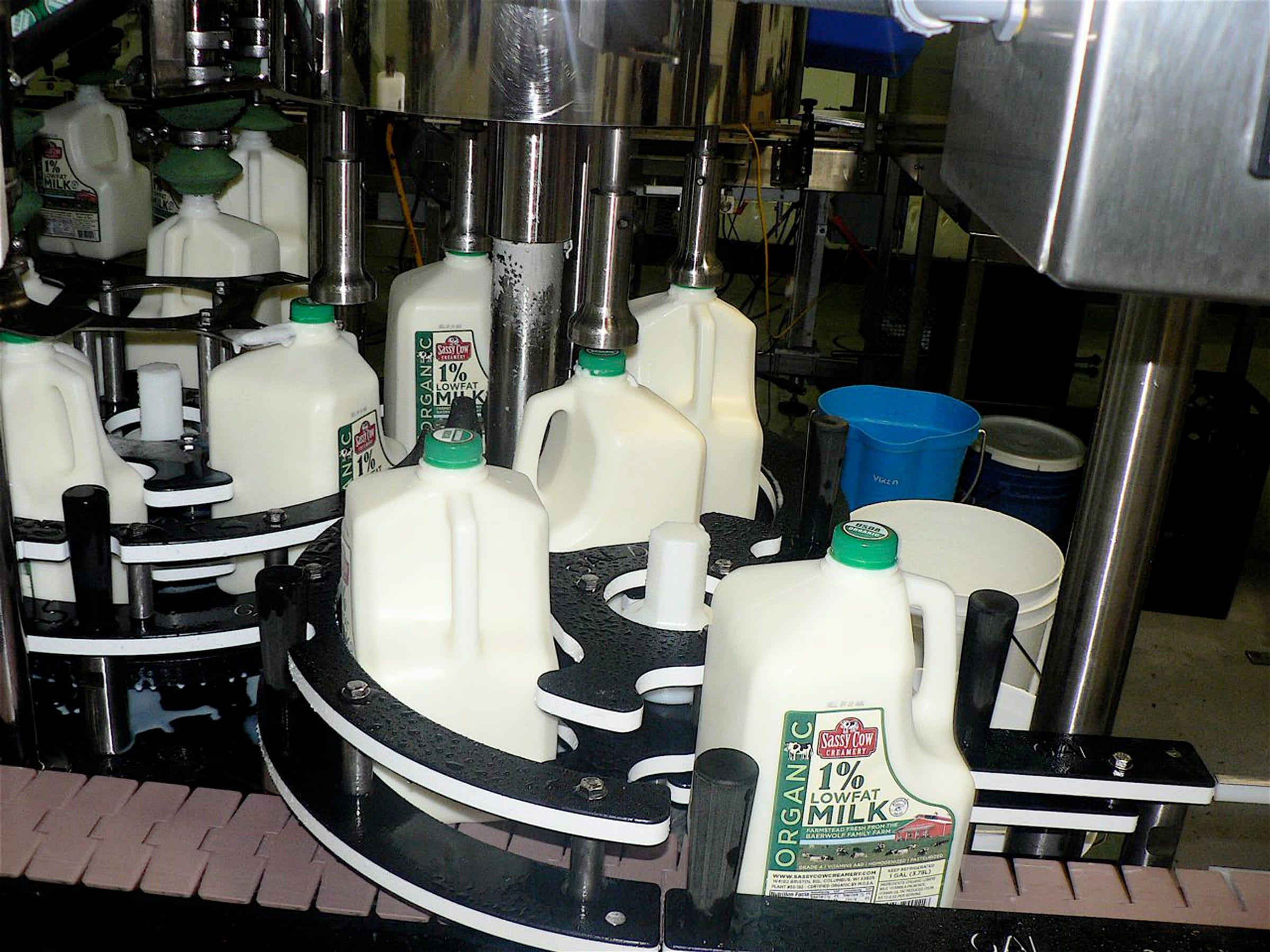 Organic milk  being bottled.