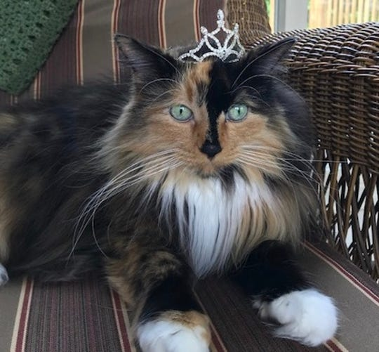 Sweet Tart the cat was elected as mayor in Omena, Michigan. She will serve for three years.