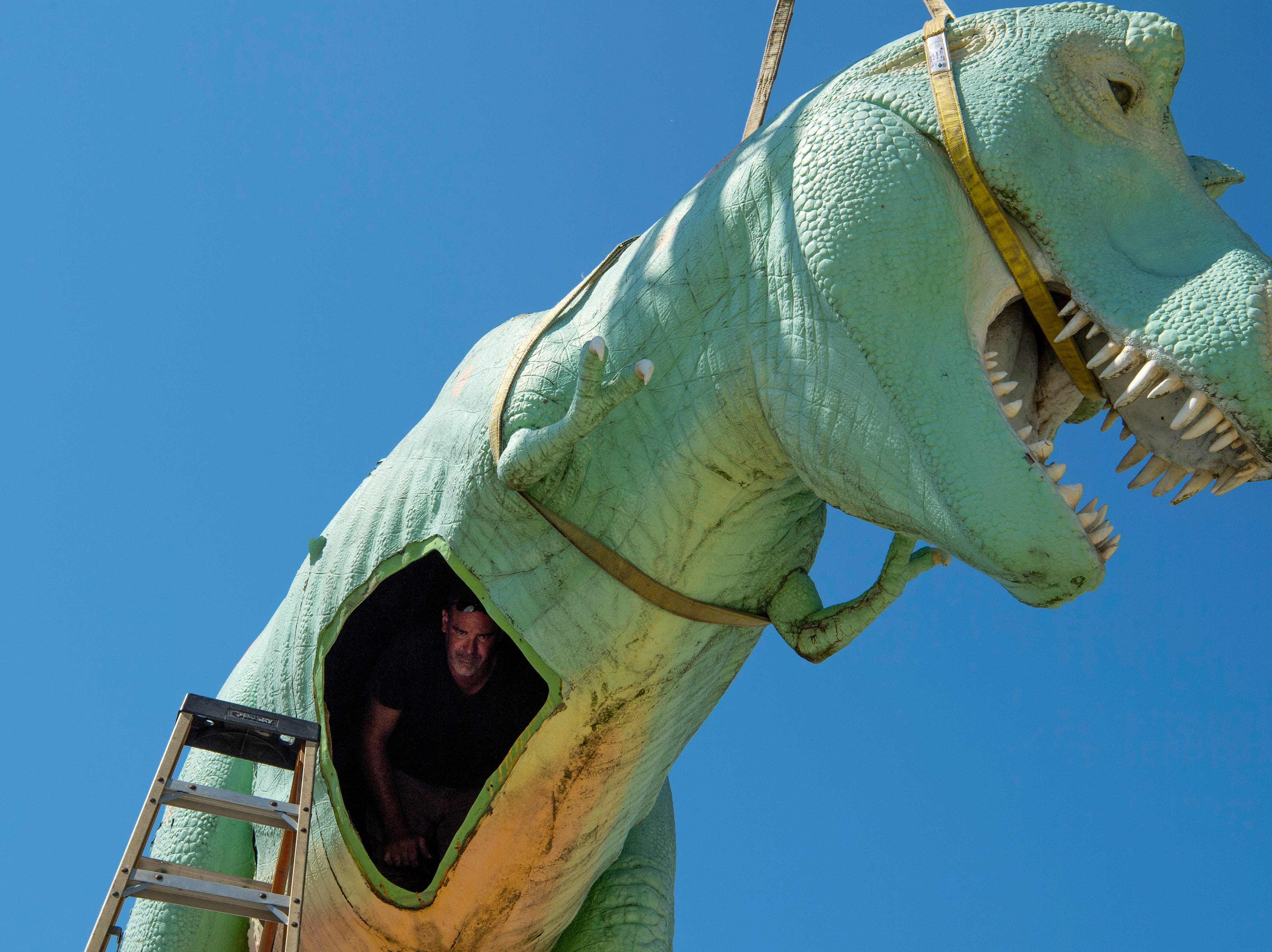 Bart Meyer with Custom Sign of Newburgh, Ind., waits for a wrench inside the belly of Millie, a Tyrannosaurus Rex dinosaur – and the Koch Family Children's Museum of Evansville's most recognizable face – Wednesday morning. Millie has perched atop her pedestal at the corner of Locust and Fifth streets for more than a decade and is getting a new paint job. It is unknown where the green T-Rex will reside after her facelift, but cMoe assures us Millie's new home will be easily seen in the Downtown Evansville area.