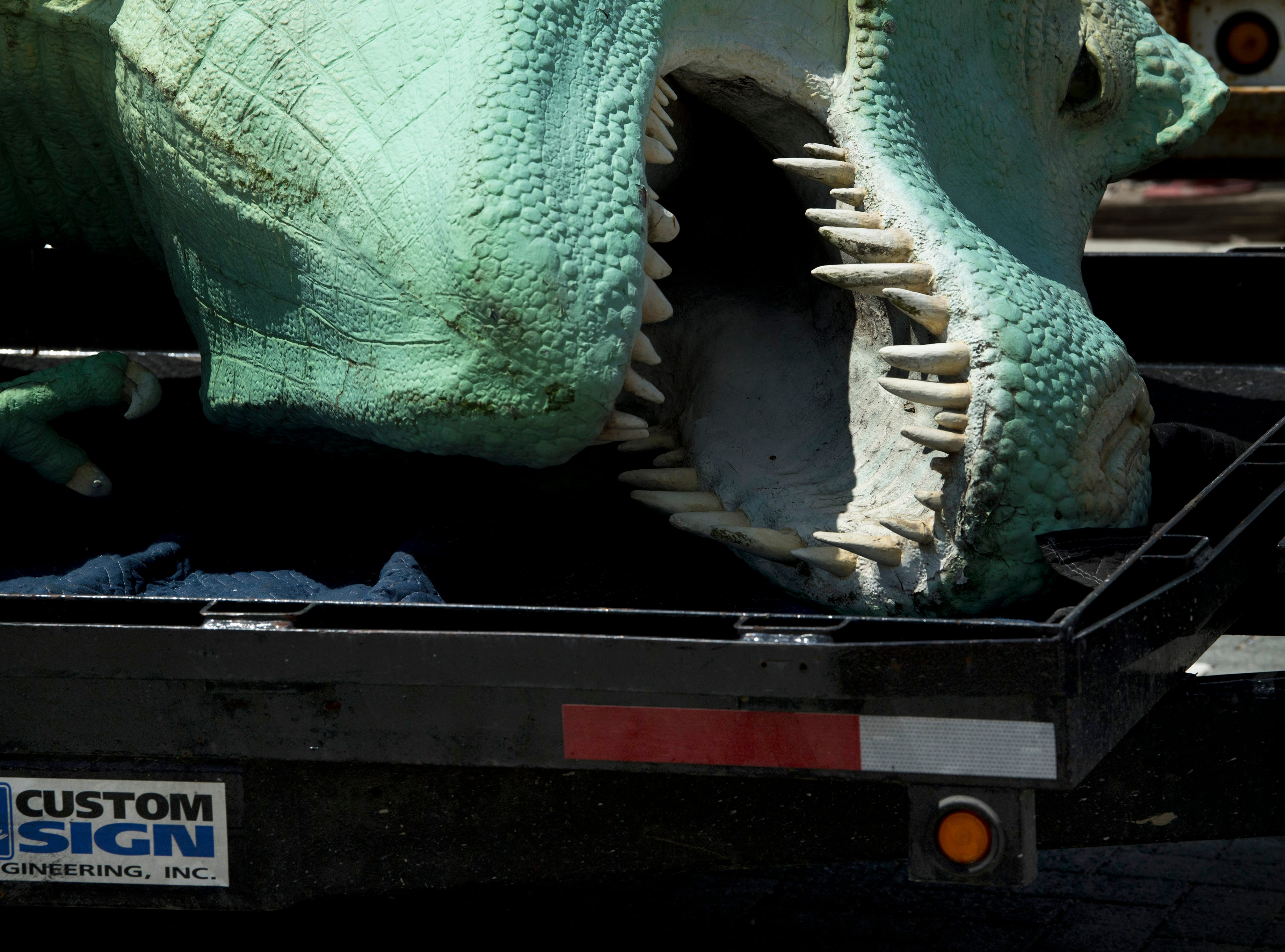 Millie, a Tyrannosaurus Rex dinosaur – and the Koch Family Children's Museum of Evansville's most recognizable face – is placed on the trailer of Custom Sign of Newburgh, Ind., Wednesday morning. Millie has perched atop her pedestal at the corner of Locust and Fifth streets for more than a decade and is getting a new paint job. It is unknown where the green T-Rex will reside after her facelift, but cMoe assures us Millie's new home will be easily seen in the Downtown Evansville area.