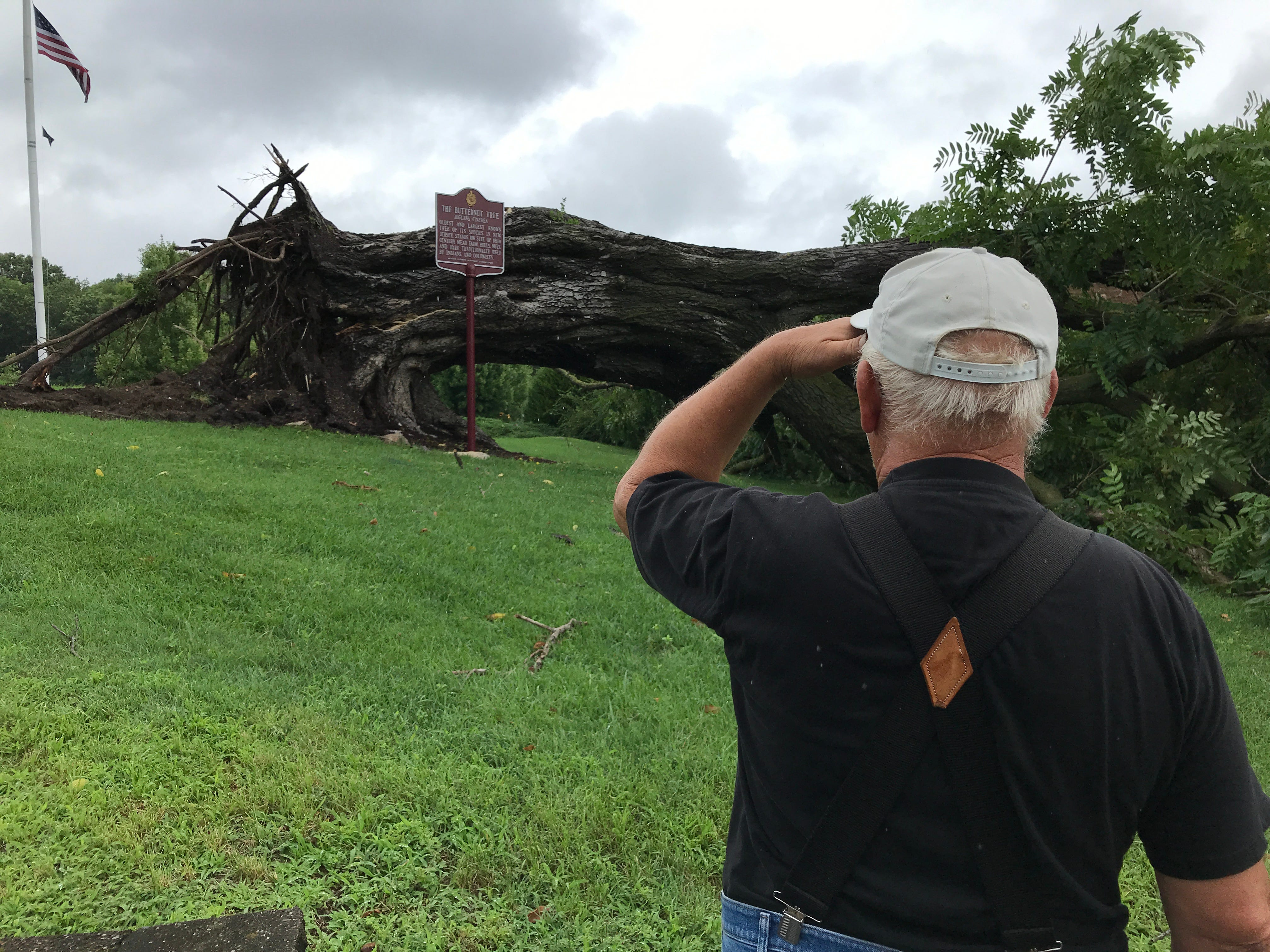 Kinnelon's historic Butternut Tree was felled by a storm that blew through the area. The tree, the oldest and largest known tree in New Jersey, is inscribed on the municipal seal and and emblazoned on local police officers' uniform patches. Longtime Kinnelon resident Ernst Huber stopped by the site.