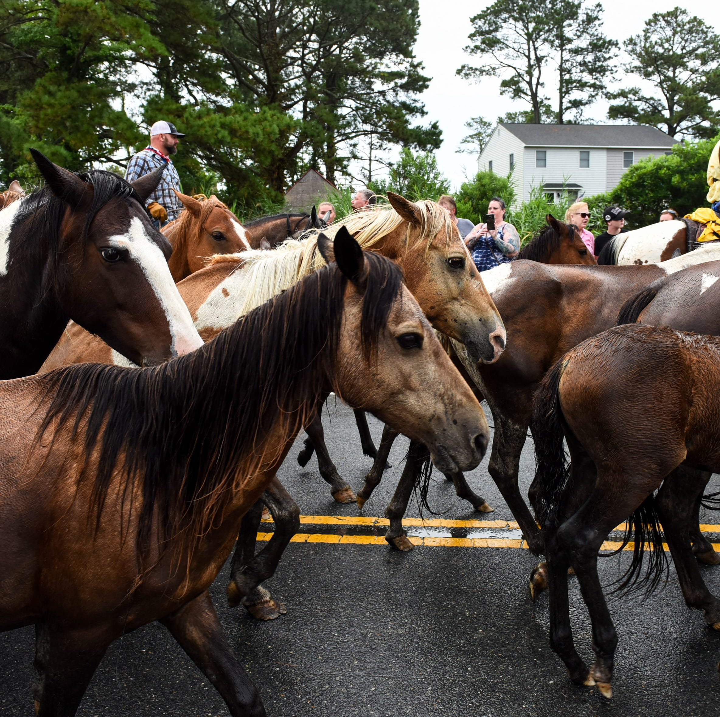 PETA says do away with Chincoteague Pony Swim. We say nay