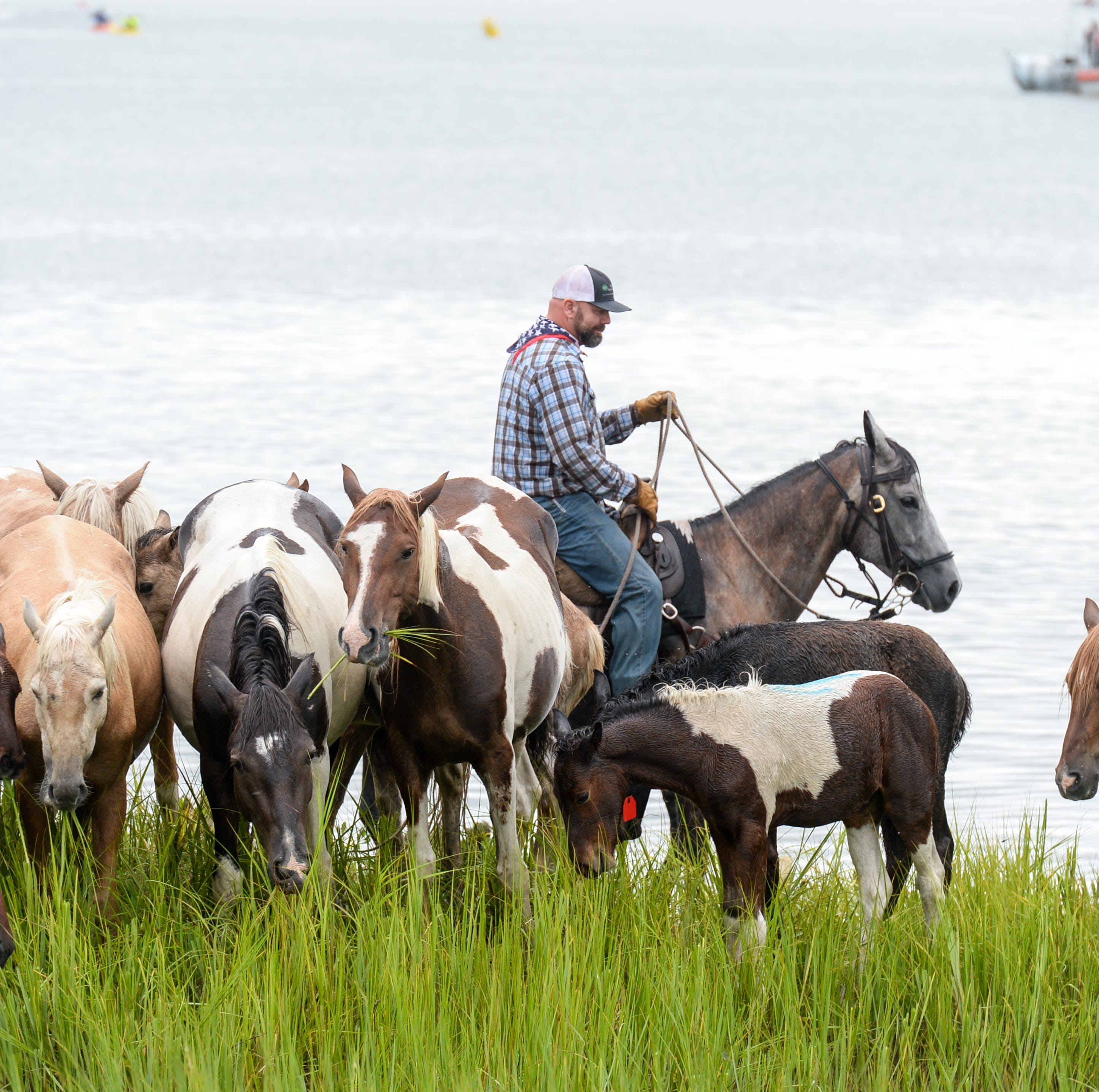 Chincoteague Pony Swim week ends in tragedy. Sympathy voiced for death