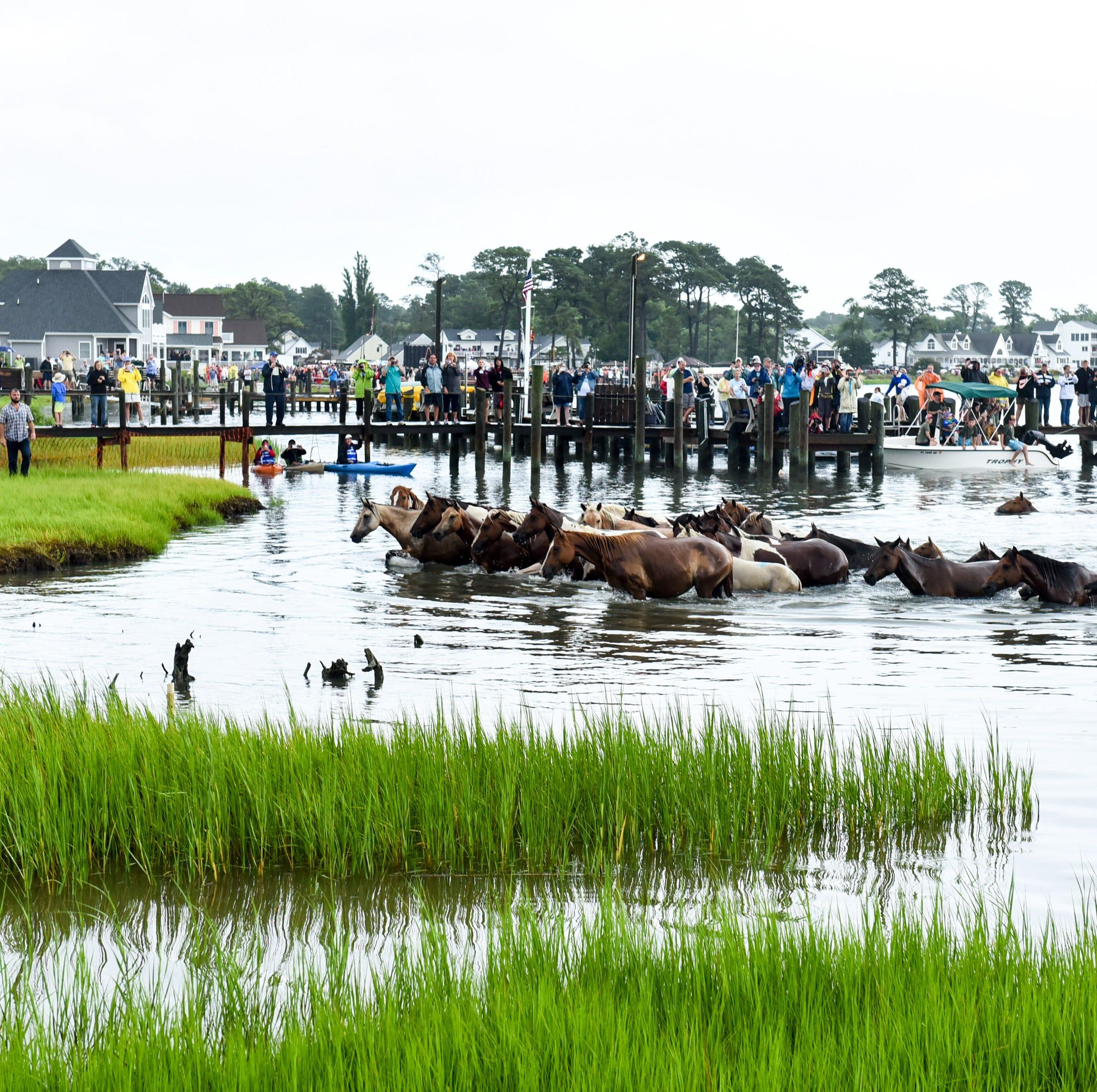 Hurricane Florence: What Chincoteague, Assateague do to keep ponies safe