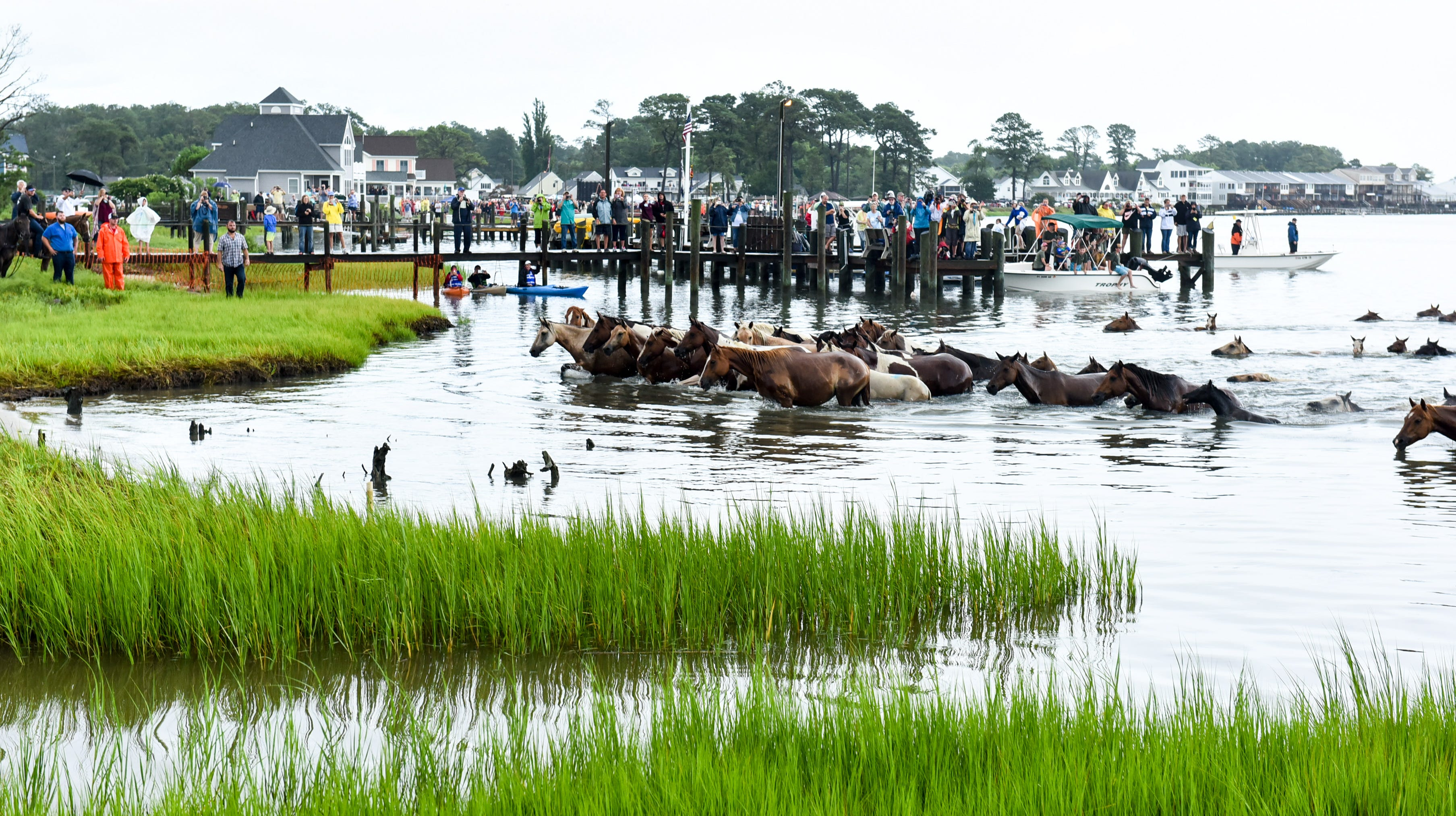 Chincoteague Volunteer Fire Company responds to PETA asking for end of Pony Swim