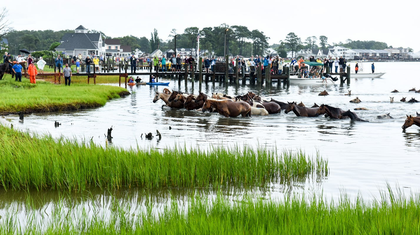 Hurricane Florence: What Chincoteague, Assateague do to keep ponies safe