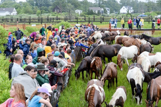 Crowds reach out to pet the ponies after the 93rd pony swim in Chincoteague Island, Virginia on July 25.