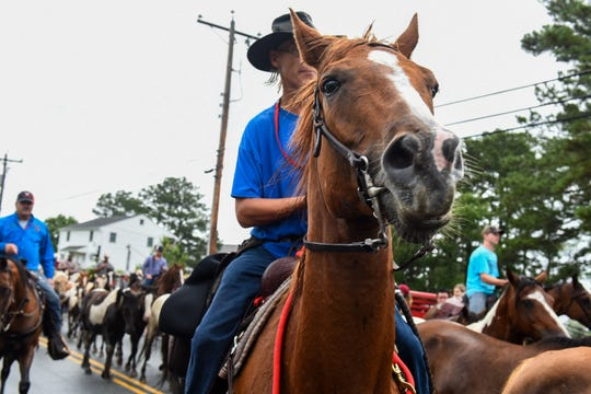 Saltwater cowboys lead Chincoteague ponies down the street after the pony swim on July 25.