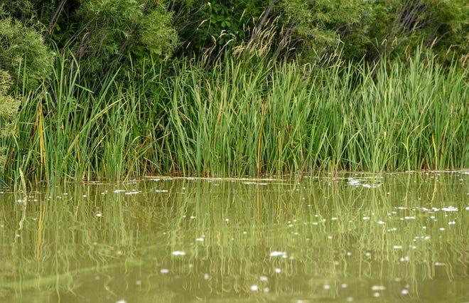 Shoreline vegetation is sparse along the shoreline of Little Rock Lake.