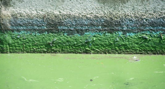 Tcn 0725 Irl Algae 2