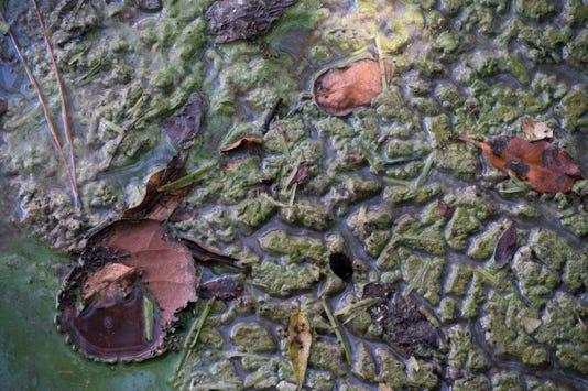 Tcn 0725 Irl Algae