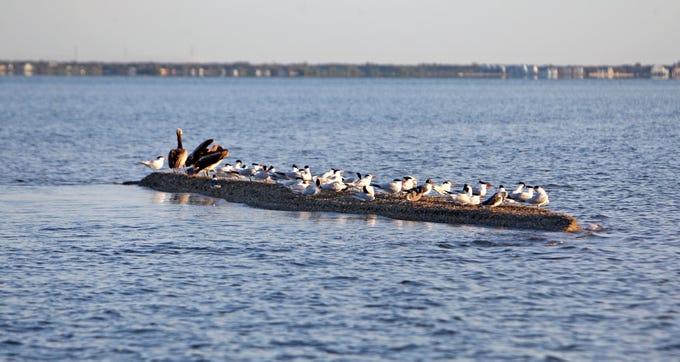 Vibrio is most prevalent from May through October in Texas bays where oysters inhabit sluggish waters.