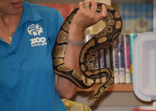 Jake the snake was on hand to teach kids at Karns Branch Library on July 24.